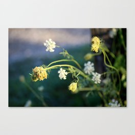 Beautiful Weeds Canvas Print