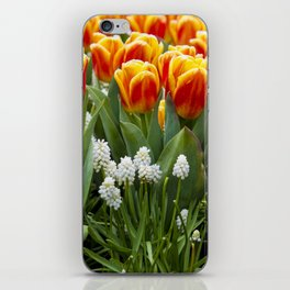 Red and Yellow Stripes Tulips with White Blossoms underneath in Amsterdam, Netherlands iPhone Skin