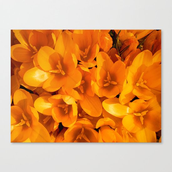 Gold in the garden Canvas Print