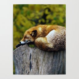 Cozy Spot Poster
