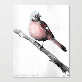 Fink (Karmingimpel) | Finch (Rosefinch) Canvas Print