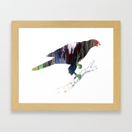 Goshawk Framed Art Print