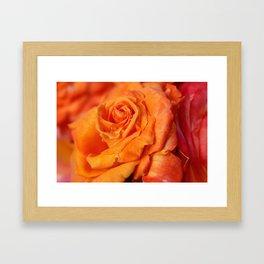Tangerine Rose Framed Art Print