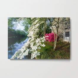 Dogwood and Azalea Blooms along the Delaware-Raritan Canal Metal Print