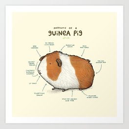Anatomy of a Guinea Pig Art Print