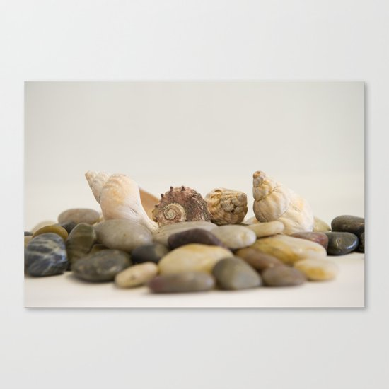 Seashells & Stones #1 #decor #art #society6 Canvas Print