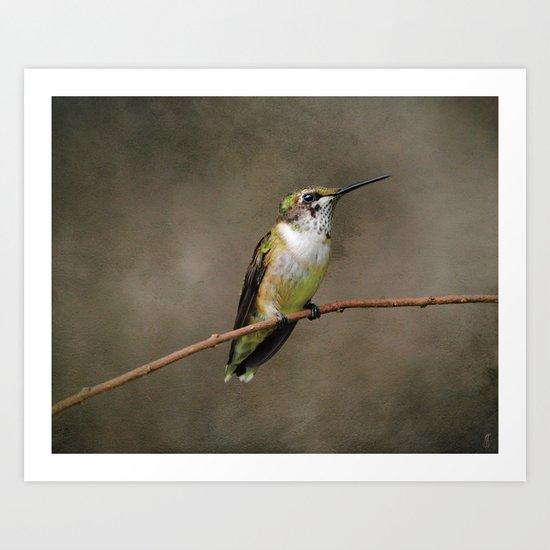 Hummingbird Portrait I Art Print