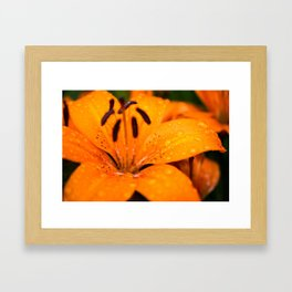 Macro Orange Flower Framed Art Print
