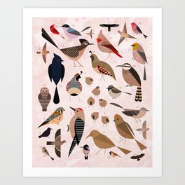 Birds of the Sonoran Desert Art Print