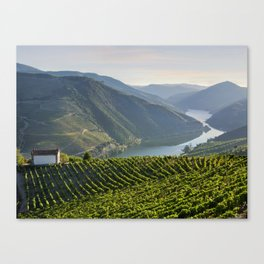 Vineyards and a chapel in the Douro Valley, Portugal Canvas Print