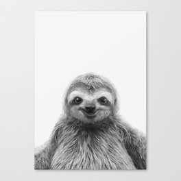 Young Sloth Canvas Print