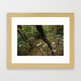 Automn 2 Framed Art Print