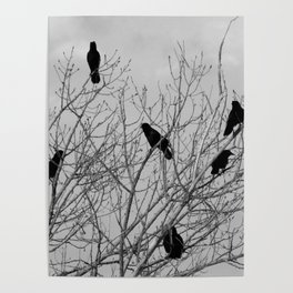 Murder Of Crows - Four Poster