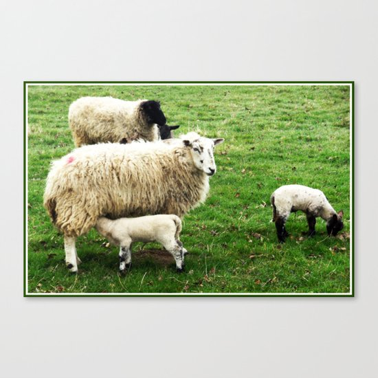 We Like Sheep Canvas Print
