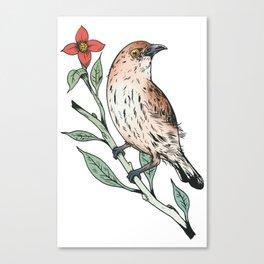 Sparrow 1 Canvas Print