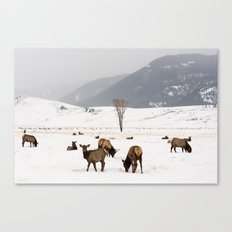 Herd of Elk in Wyoming on a Snowy Winter Day Canvas Print