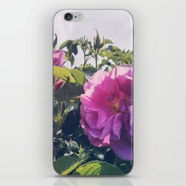 Roses in the Park iPhone Skin