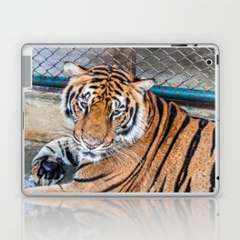 Tiger, My Bottom is Not Made Out of Springs Laptop & iPad Skin