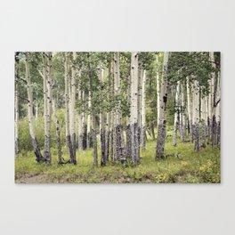 Aspen Stand Canvas Print