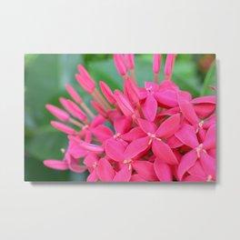 Pink Petals CR Metal Print