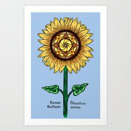 Common Sunflower Art Print
