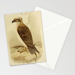 Vintage Print - The Birds of Australia (1891) - White-Headed Osprey Stationery Cards