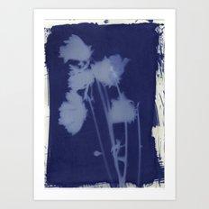 Cyanotype Flower One Art Print