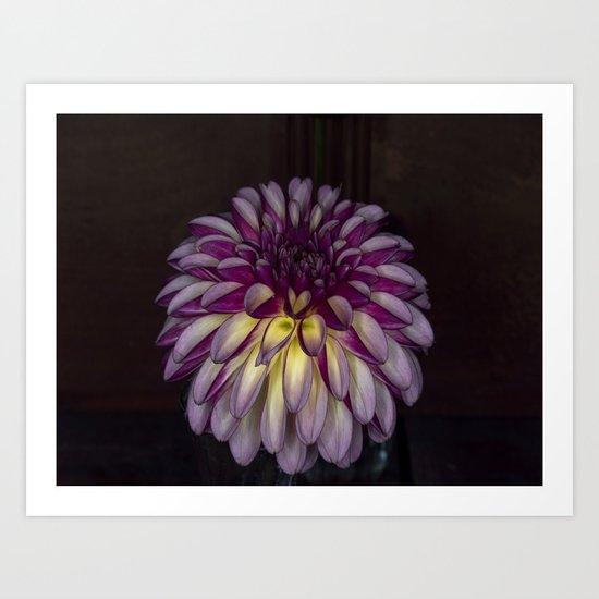 Flower glow Art Print