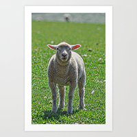 lamb Art Prints featuring Lamb by  Alexia Miles photography