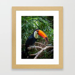 A toucan laid on a tree branch in the forest Framed Art Print