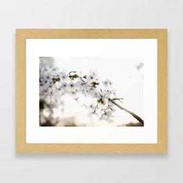 Cherry Tree Blossoms Framed Art Print