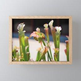 Pitcher Plants Framed Mini Art Print