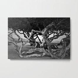 Curvy trees in the park Metal Print