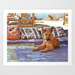 Dahab Dog Art Print