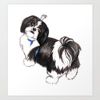 shih tzu Art Prints featuring Shih Tzu by HannahClarkArt