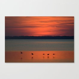 A flock of geese flying north across the calm evening waters of the bay Canvas Print