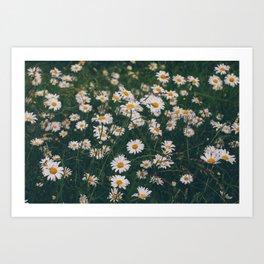Daisy, let it go.... Art Print