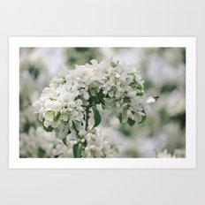 Whisper White Art Print