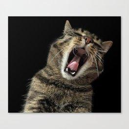 Cat Yawning Canvas Print