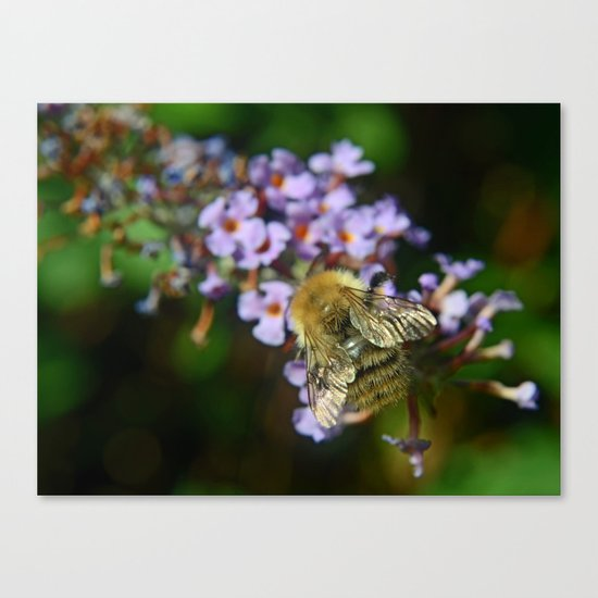 Fluffy Bumble Canvas Print