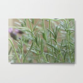 Do you smell the lavender? Metal Print