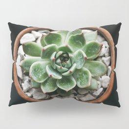 Echevaria Colorata I Pillow Sham