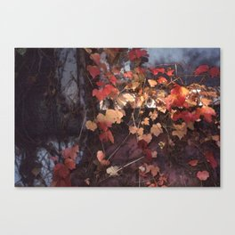 Autumn Leaves with Sun Canvas Print