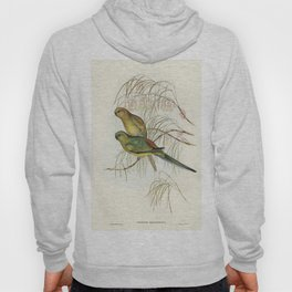 Red-backed Parakeet (Psephotus haematonotus) illustrated by Elizabeth Gould (1804-1841) for John Gou Hoody