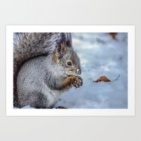 squirrel Art Prints featuring Squirrel by Svetlana Korneliuk