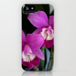 Laeliocattleya Orchid iPhone Case