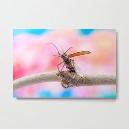 flying beetle Metal Print