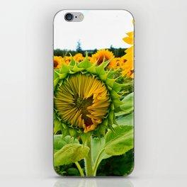 Sunflower Prepares to Unfold Itself iPhone Skin
