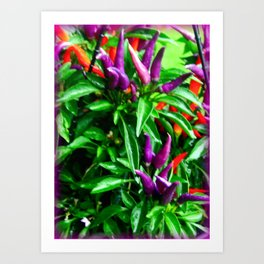 Chilli Peppers Art Print
