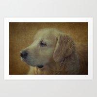 golden retriever Art Prints featuring Golden Retriever by mexi-photos